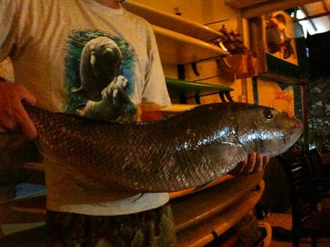 enormous fish.JPG